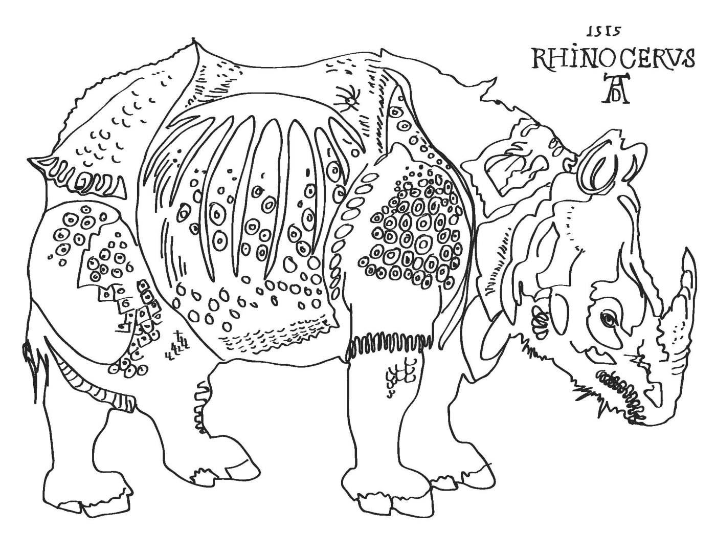 albrecht durer u0027s rhino art and the everyday