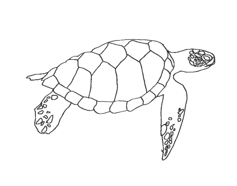 Happy sea turtles the everyday for Sea turtles coloring pages