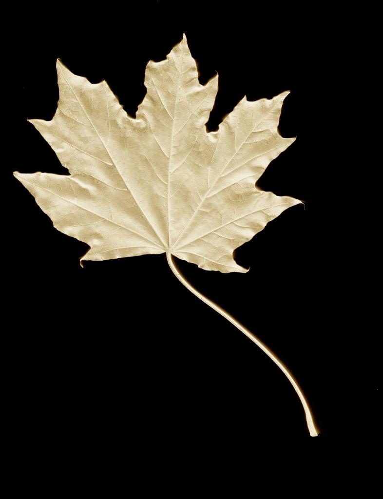 Ghost Leaf 4